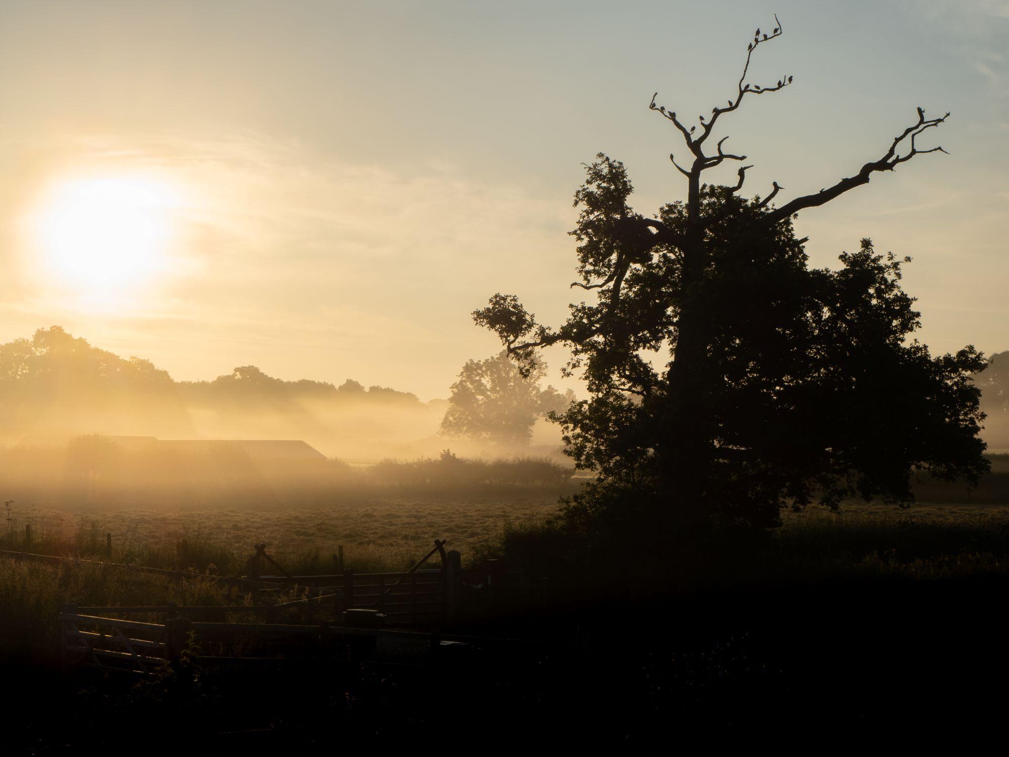 July misty morning West Felton